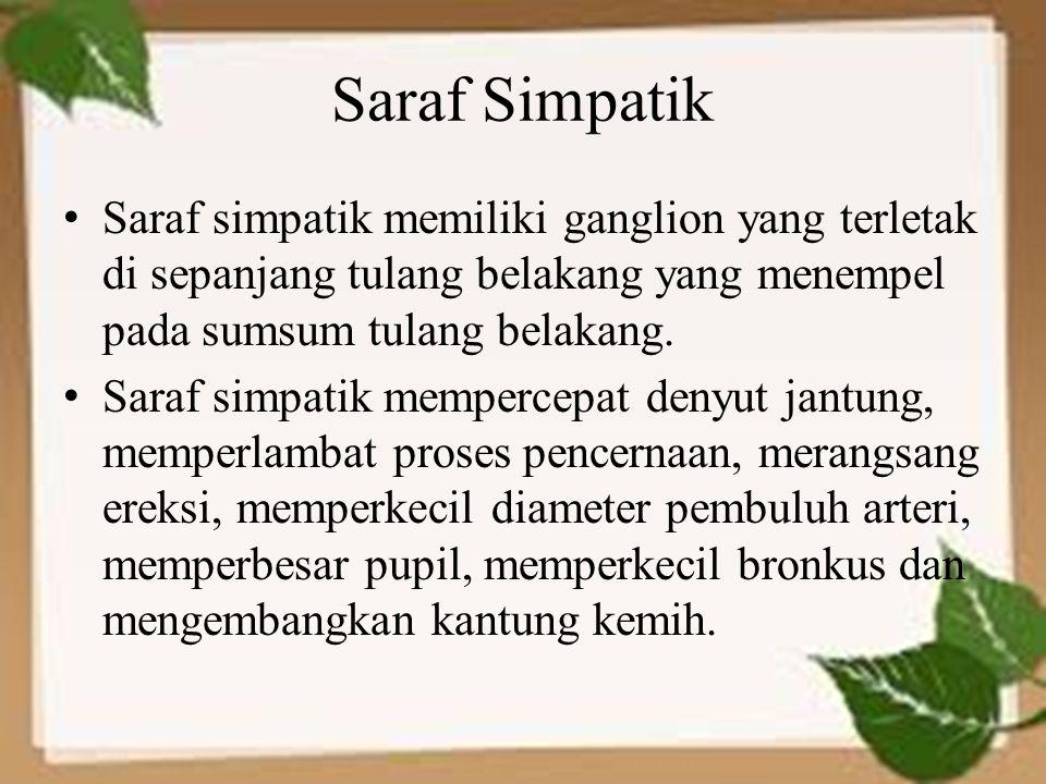 Saraf Simpatik Saraf simpatik memiliki ganglion yang terletak di sepanjang tulang belakang yang menempel pada sumsum tulang belakang. Saraf simpatik m