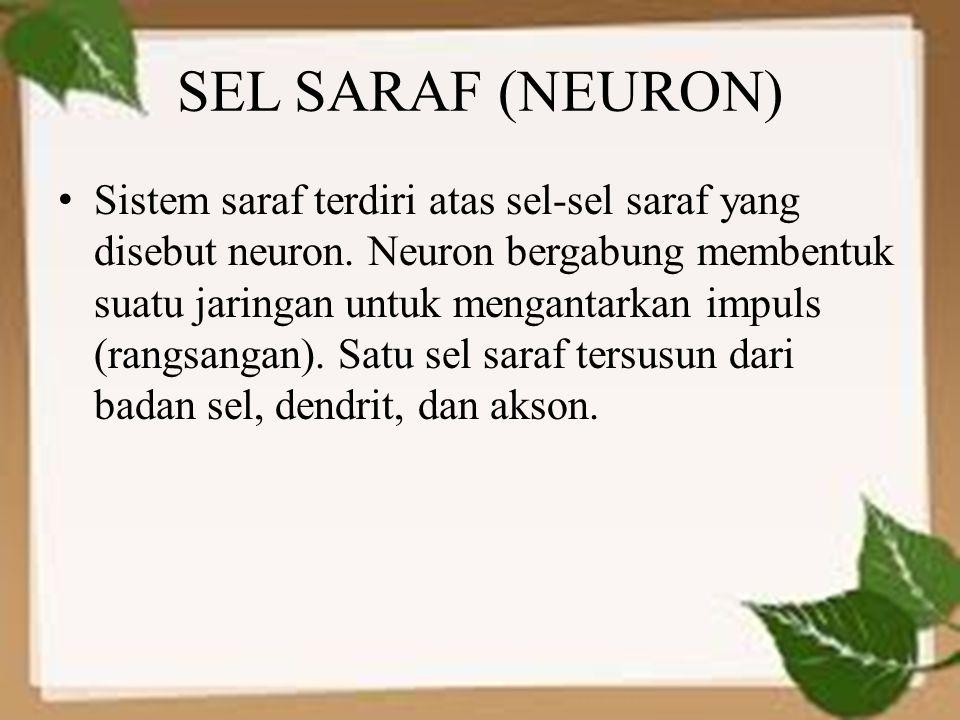 SEL SARAF (NEURON) Sistem saraf terdiri atas sel-sel saraf yang disebut neuron. Neuron bergabung membentuk suatu jaringan untuk mengantarkan impuls (r