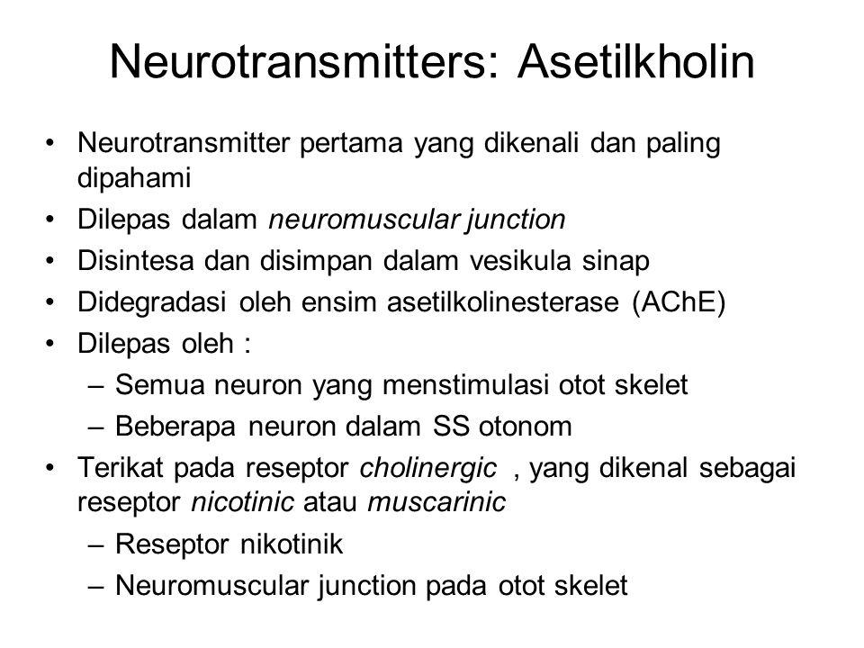 Neurotransmitter pertama yang dikenali dan paling dipahami Dilepas dalam neuromuscular junction Disintesa dan disimpan dalam vesikula sinap Didegradasi oleh ensim asetilkolinesterase (AChE) Dilepas oleh : –Semua neuron yang menstimulasi otot skelet –Beberapa neuron dalam SS otonom Terikat pada reseptor cholinergic, yang dikenal sebagai reseptor nicotinic atau muscarinic –Reseptor nikotinik –Neuromuscular junction pada otot skelet Neurotransmitters: Asetilkholin