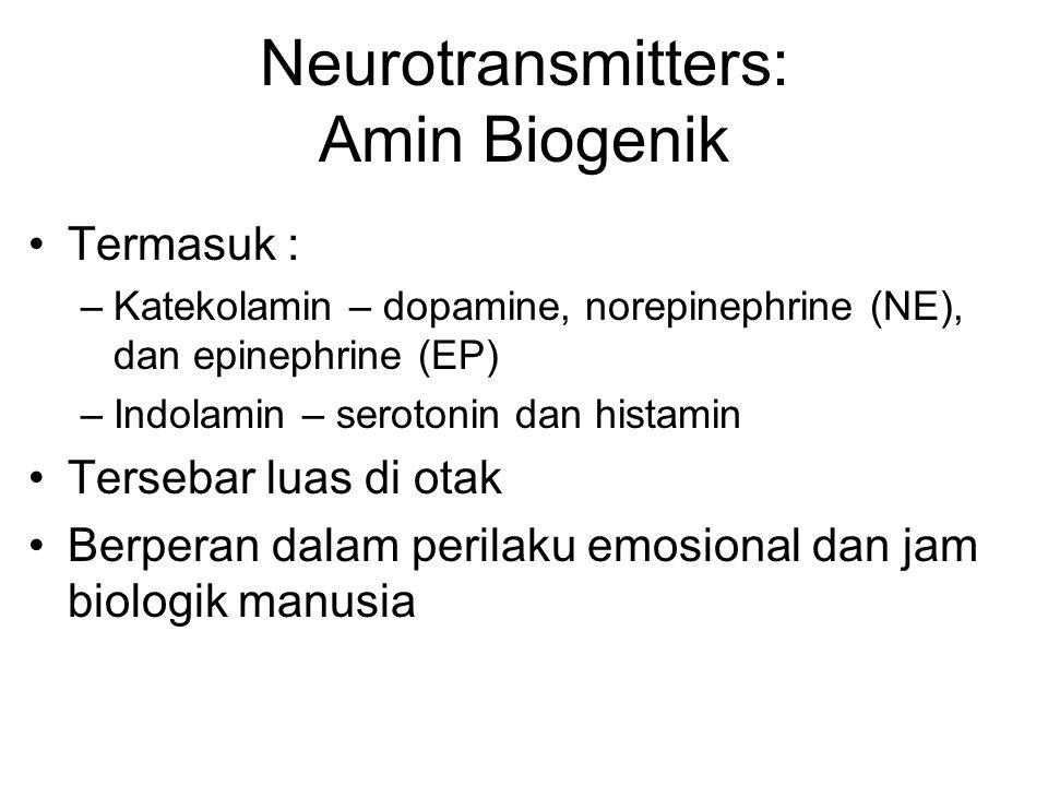 Termasuk : –Katekolamin – dopamine, norepinephrine (NE), dan epinephrine (EP) –Indolamin – serotonin dan histamin Tersebar luas di otak Berperan dalam perilaku emosional dan jam biologik manusia Neurotransmitters: Amin Biogenik