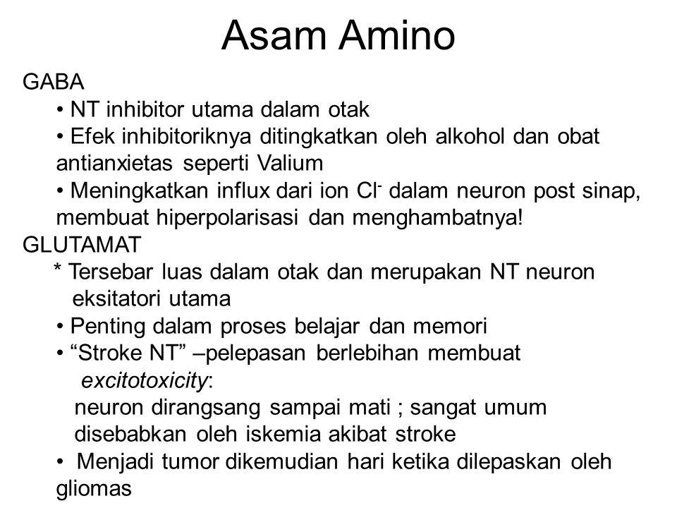 Asam Amino GABA NT inhibitor utama dalam otak Efek inhibitoriknya ditingkatkan oleh alkohol dan obat antianxietas seperti Valium Meningkatkan influx dari ion Cl - dalam neuron post sinap, membuat hiperpolarisasi dan menghambatnya.