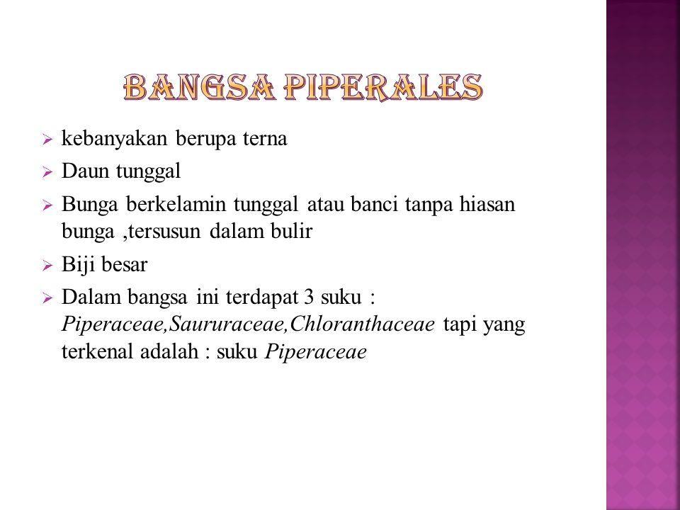  Daging buah nangka muda (tewel) dimanfaatkan sebagai makanan sayuran.