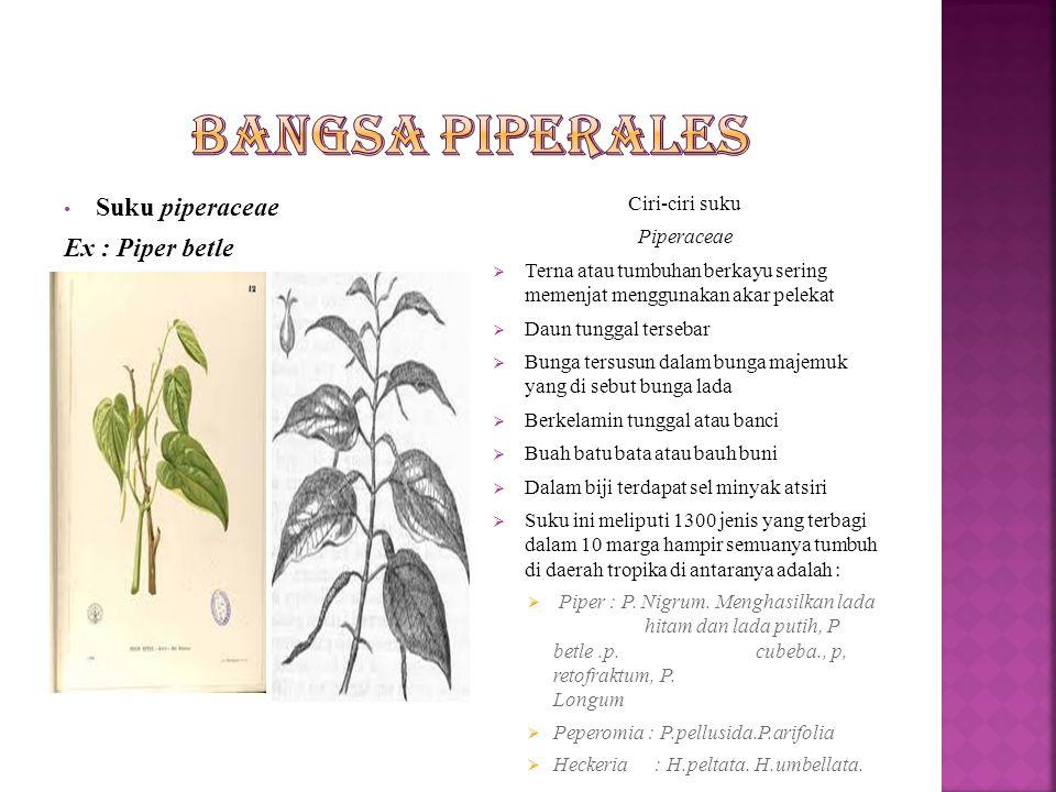  kebanyakan berupa terna  Daun tunggal  Bunga berkelamin tunggal atau banci tanpa hiasan bunga,tersusun dalam bulir  Biji besar  Dalam bangsa ini terdapat 3 suku : Piperaceae,Saururaceae,Chloranthaceae tapi yang terkenal adalah : suku Piperaceae