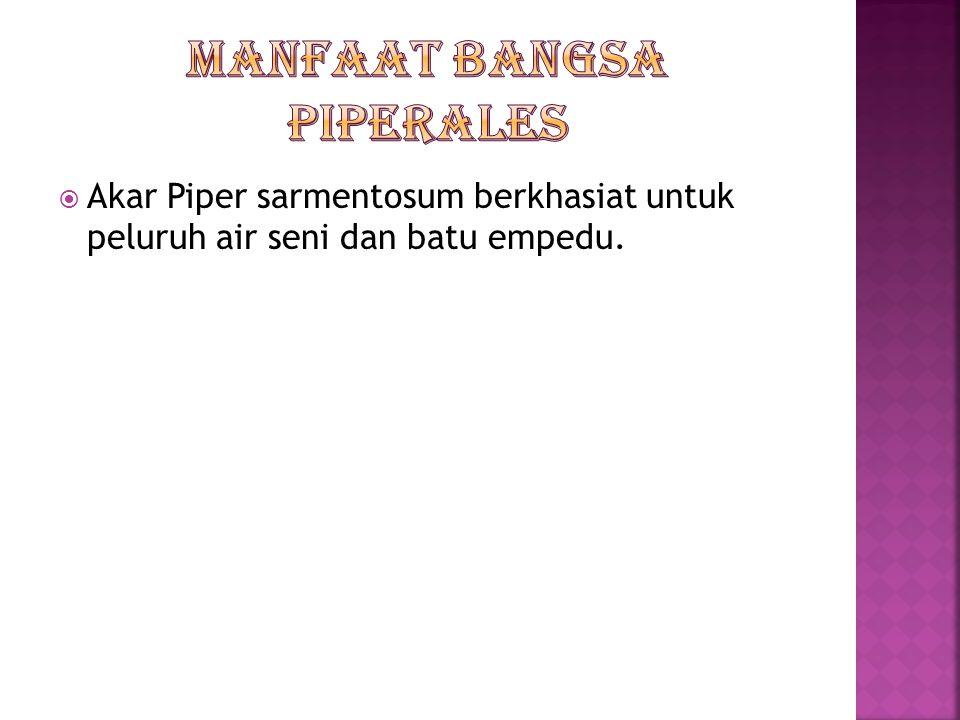 Suku piperaceae Ex : Piper betle Ciri-ciri suku Piperaceae  Terna atau tumbuhan berkayu sering memenjat menggunakan akar pelekat  Daun tunggal terse