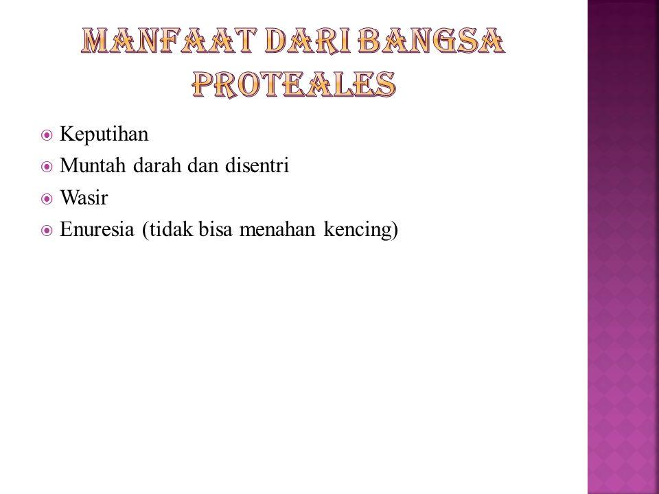 Suku Proteaceae Ex : Ciri-ciri suku Proteaceae  Berupa tumbuhan pohon atau perdu  Daun tunggal atau bertoreh,menyirip,seperti belulang atau kaku,dud
