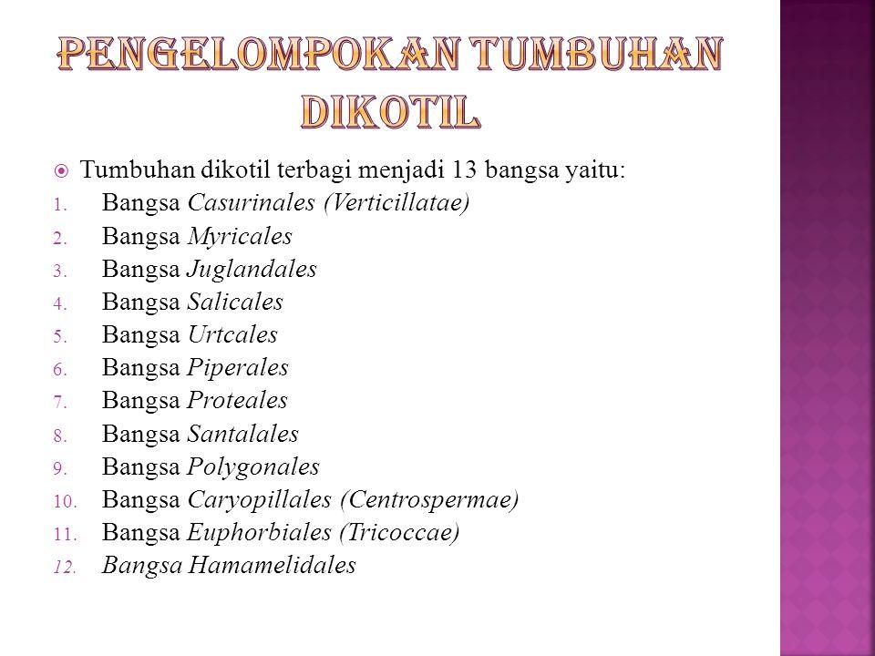 DICOTYLEDONAE 1.Anak kelas Monochlamyd ae 2. Anak kelas Dialypetale 3.