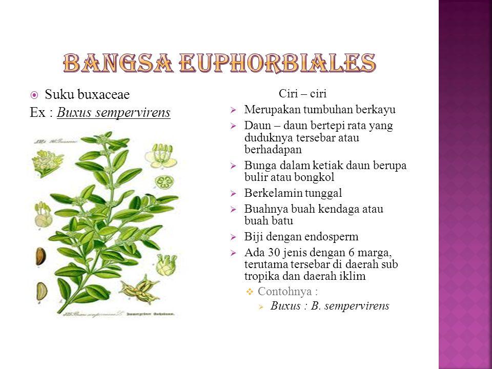  Suku Dichapetalaceae Ex : Ciri-ciri  Tumbuhan berupa berkayu berupa liana  Daun-daun tunggal, bertepi rata duduknya tersebar, mempunyai daun penumpu.