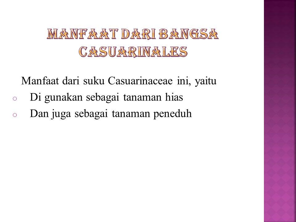 Manfaat dari suku Casuarinaceae ini, yaitu o Di gunakan sebagai tanaman hias o Dan juga sebagai tanaman peneduh