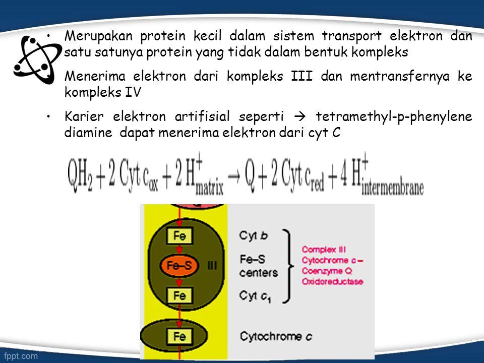 Merupakan protein kecil dalam sistem transport elektron dan satu satunya protein yang tidak dalam bentuk kompleks Menerima elektron dari kompleks III