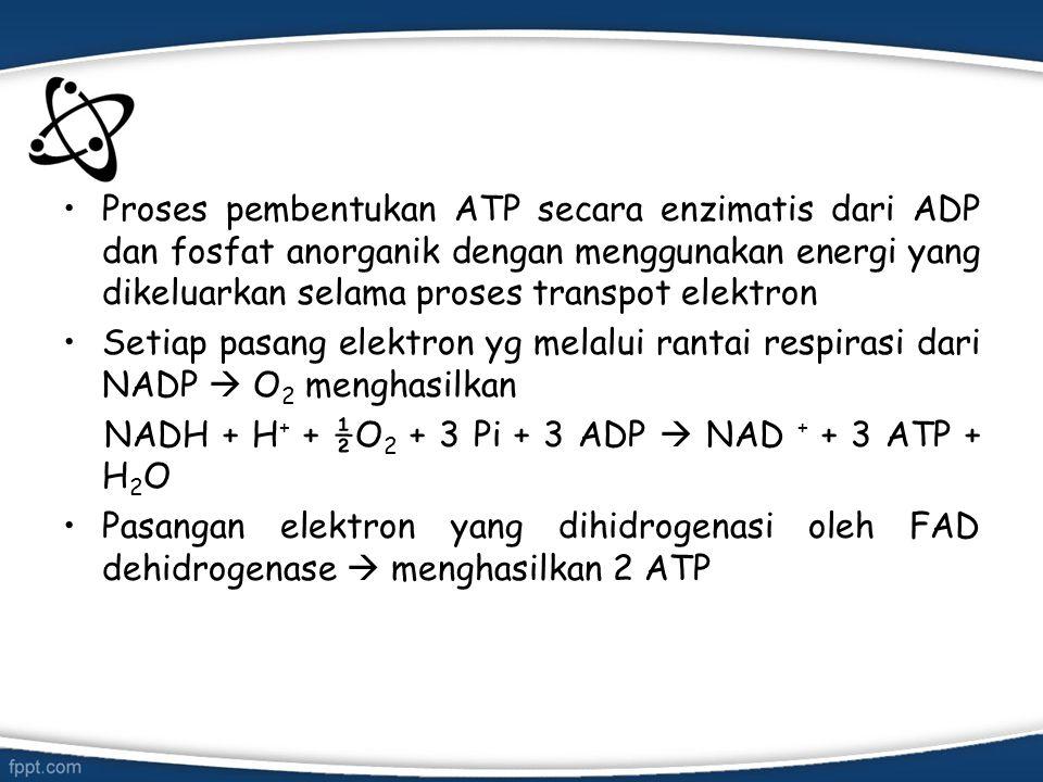 Proses pembentukan ATP secara enzimatis dari ADP dan fosfat anorganik dengan menggunakan energi yang dikeluarkan selama proses transpot elektron Setia