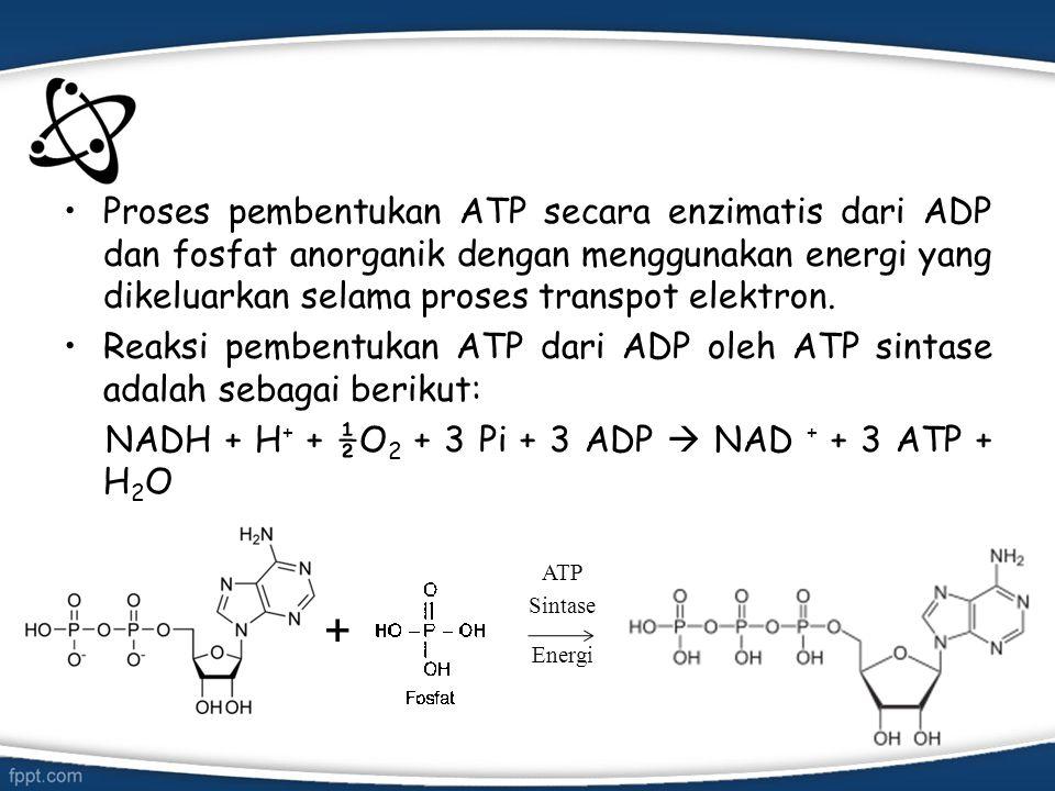 Proses pembentukan ATP secara enzimatis dari ADP dan fosfat anorganik dengan menggunakan energi yang dikeluarkan selama proses transpot elektron. Reak