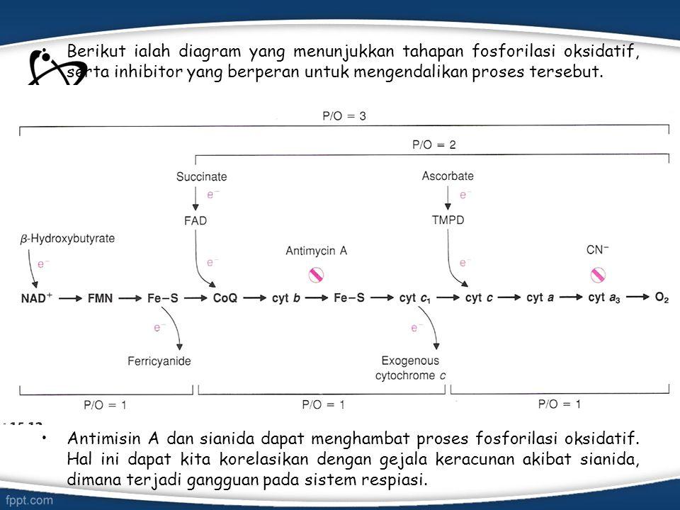 Berikut ialah diagram yang menunjukkan tahapan fosforilasi oksidatif, serta inhibitor yang berperan untuk mengendalikan proses tersebut. Antimisin A d