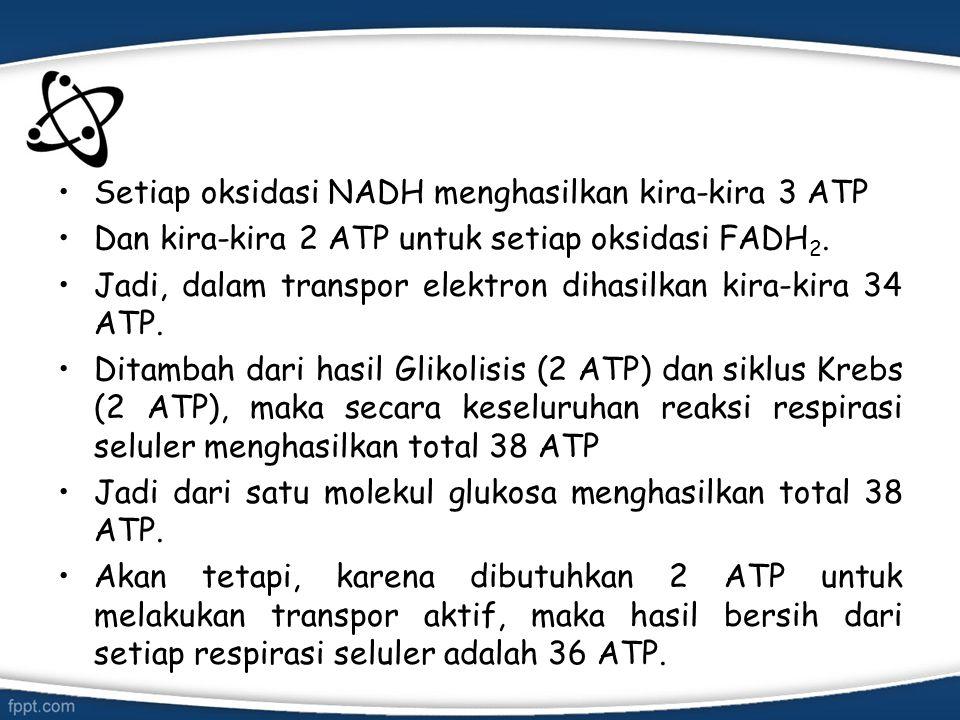 Setiap oksidasi NADH menghasilkan kira-kira 3 ATP Dan kira-kira 2 ATP untuk setiap oksidasi FADH 2. Jadi, dalam transpor elektron dihasilkan kira-kira