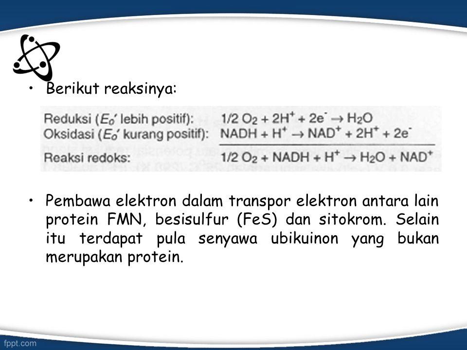 Berikut reaksinya: Pembawa elektron dalam transpor elektron antara lain protein FMN, besisulfur (FeS) dan sitokrom. Selain itu terdapat pula senyawa u