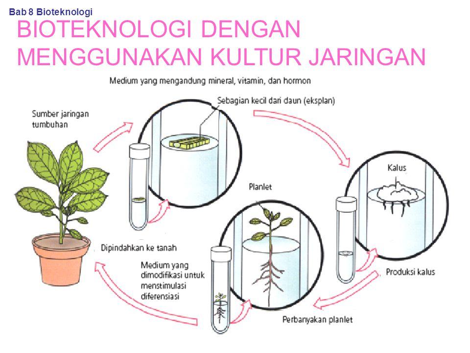 BIOTEKNOLOGI DENGAN MENGGUNAKAN KULTUR JARINGAN Bab 8 Bioteknologi
