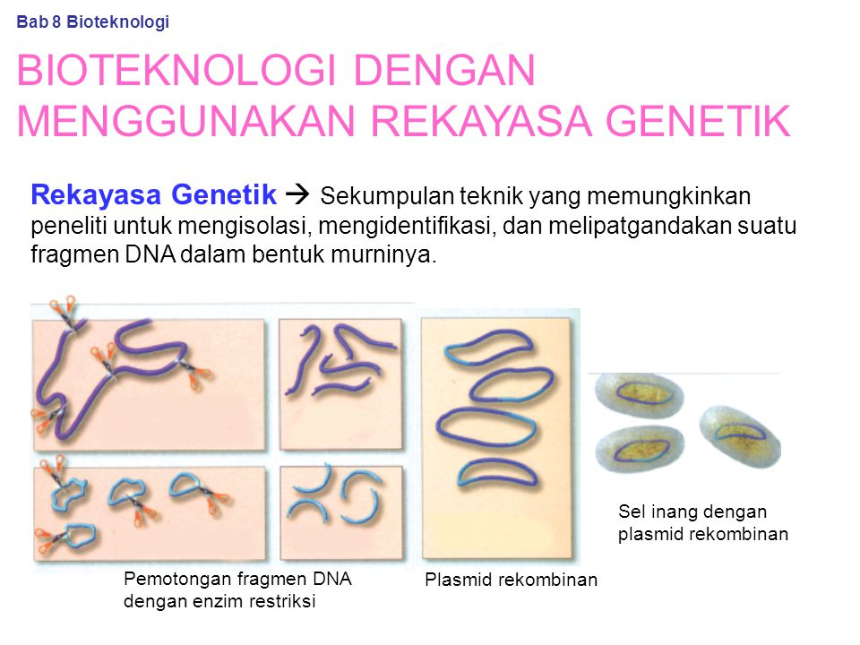 BIOTEKNOLOGI DENGAN MENGGUNAKAN REKAYASA GENETIK Rekayasa Genetik  Sekumpulan teknik yang memungkinkan peneliti untuk mengisolasi, mengidentifikasi, dan melipatgandakan suatu fragmen DNA dalam bentuk murninya.