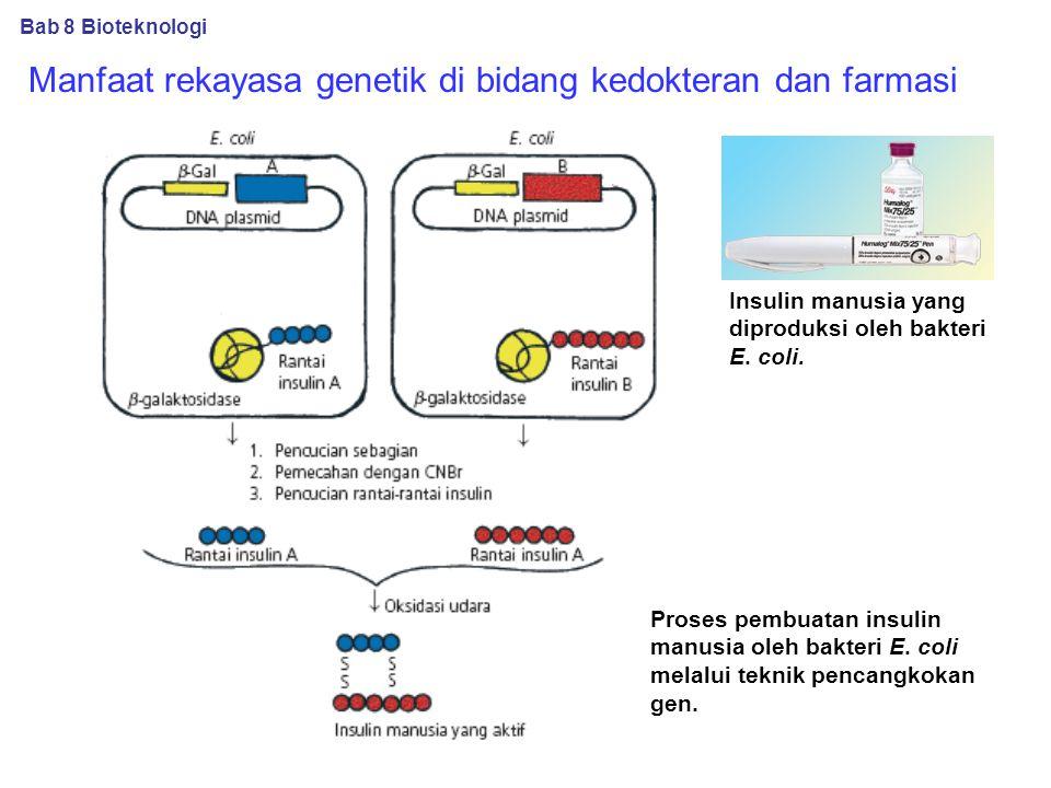 Manfaat rekayasa genetik di bidang kedokteran dan farmasi Insulin manusia yang diproduksi oleh bakteri E.