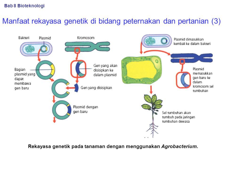 Manfaat rekayasa genetik di bidang peternakan dan pertanian (3) Rekayasa genetik pada tanaman dengan menggunakan Agrobacterium.