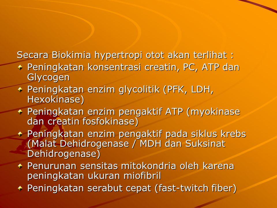 Secara Biokimia hypertropi otot akan terlihat : Peningkatan konsentrasi creatin, PC, ATP dan Glycogen Peningkatan enzim glycolitik (PFK, LDH, Hexokinase) Peningkatan enzim pengaktif ATP (myokinase dan creatin fosfokinase) Peningkatan enzim pengaktif pada siklus krebs (Malat Dehidrogenase / MDH dan Suksinat Dehidrogenase) Penurunan sensitas mitokondria oleh karena peningkatan ukuran miofibril Peningkatan serabut cepat (fast-twitch fiber)