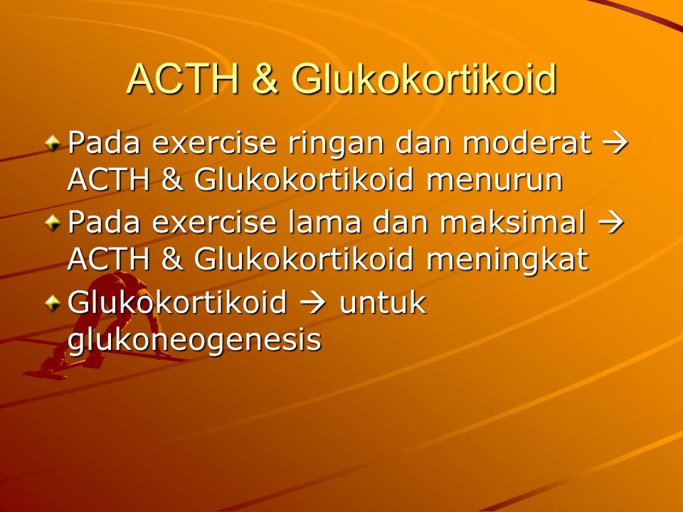 ACTH & Glukokortikoid Pada exercise ringan dan moderat  ACTH & Glukokortikoid menurun Pada exercise lama dan maksimal  ACTH & Glukokortikoid meningkat Glukokortikoid  untuk glukoneogenesis