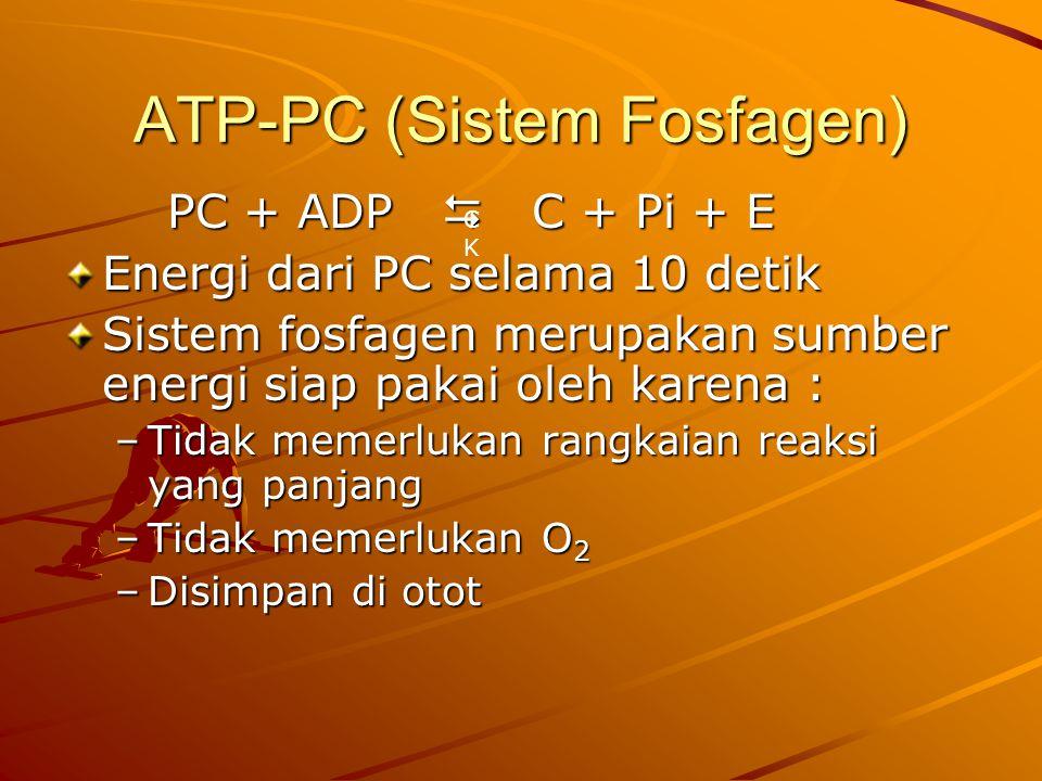 ATP-PC (Sistem Fosfagen) PC + ADP  C + Pi + E Energi dari PC selama 10 detik Sistem fosfagen merupakan sumber energi siap pakai oleh karena : –Tidak memerlukan rangkaian reaksi yang panjang –Tidak memerlukan O 2 –Disimpan di otot CKCK