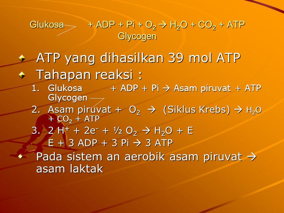 Glukosa + ADP + Pi + O 2  H 2 O + CO 2 + ATP Glycogen ATP yang dihasilkan 39 mol ATP Tahapan reaksi : 1.Glukosa + ADP + Pi  Asam piruvat + ATP Glycogen 2.Asam piruvat + O 2  (Siklus Krebs)  H 2 O + CO 2 + ATP 3.2 H + + 2e - + ½ O 2  H 2 O + E E + 3 ADP + 3 Pi  3 ATP  Pada sistem an aerobik asam piruvat  asam laktak