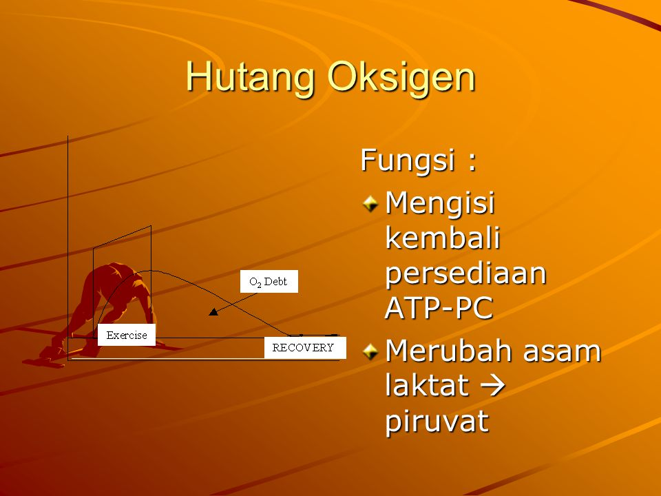 Hutang Oksigen Fungsi : Mengisi kembali persediaan ATP-PC Merubah asam laktat  piruvat