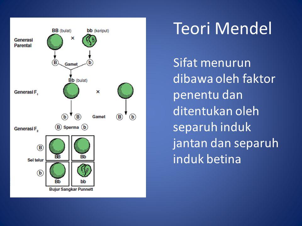 Teori Mendel Sifat menurun dibawa oleh faktor penentu dan ditentukan oleh separuh induk jantan dan separuh induk betina