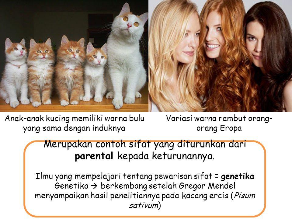 v Anak-anak kucing memiliki warna bulu yang sama dengan induknya Variasi warna rambut orang- orang Eropa Merupakan contoh sifat yang diturunkan dari p