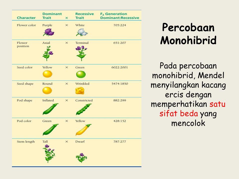 Pada percobaan monohibrid, Mendel menyilangkan kacang ercis dengan memperhatikan satu sifat beda yang mencolok Percobaan Monohibrid