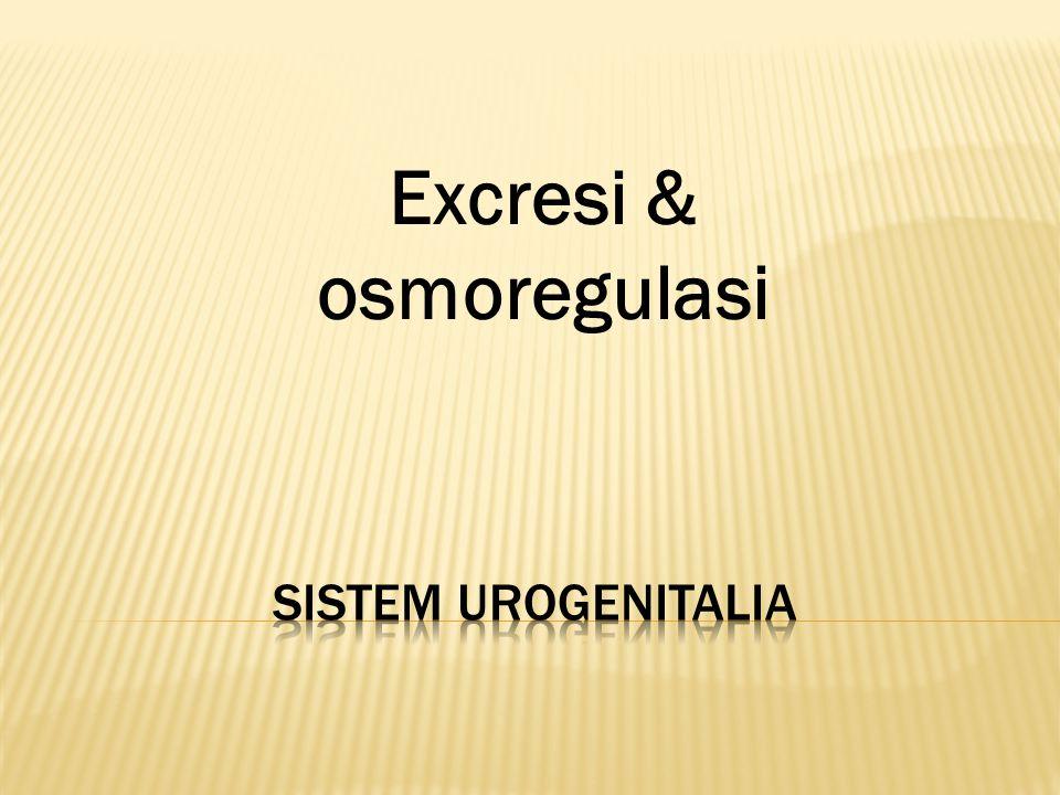  Merupakan gabungan dari sistem urinaria dan genitalia  Sistem-nya berbeda, tetapi pembuluh pengeluaran nya sama  dibahas brsamaan Sistem Urinaria -Ginjal -Pembuluh -Lubang pengeluaran Sistem Genitalia -Testis/ovum -Pembuluh/ductus -Lubang pengeluaran