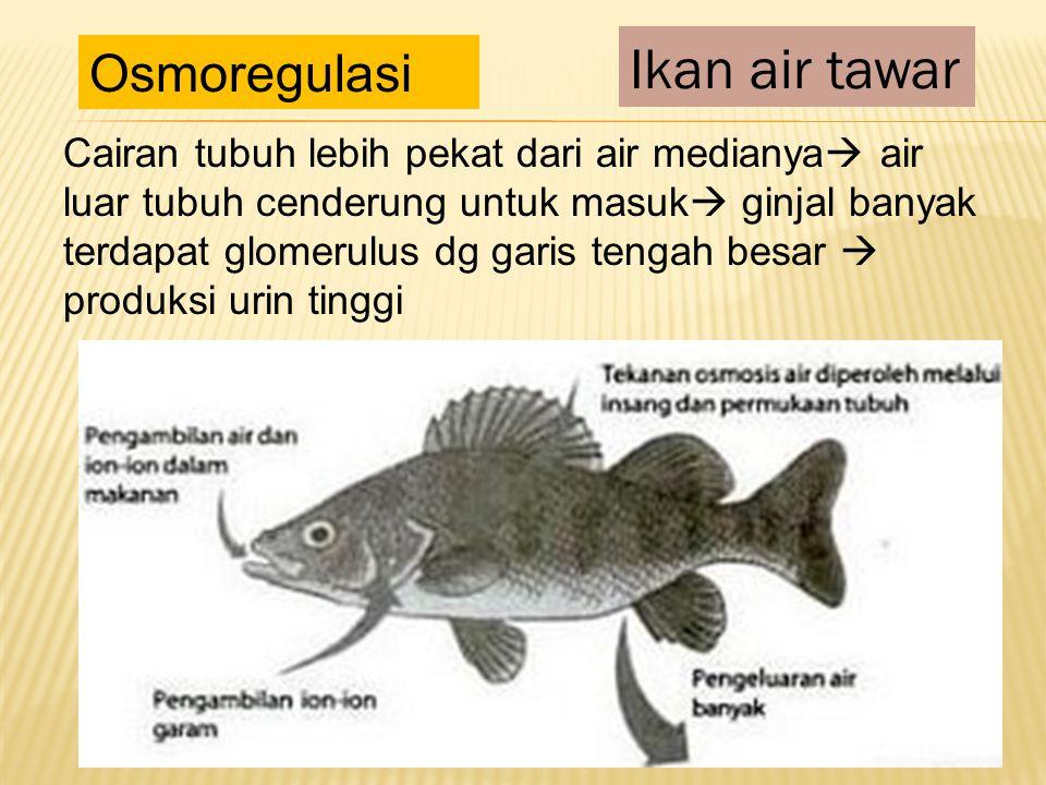 Cairan tubuh lebih pekat dari air medianya  air luar tubuh cenderung untuk masuk  ginjal banyak terdapat glomerulus dg garis tengah besar  produksi urin tinggi Ikan air tawar Osmoregulasi