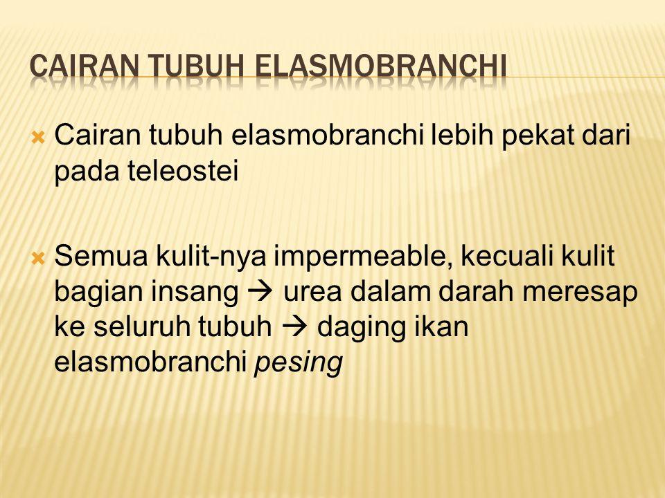  Cairan tubuh elasmobranchi lebih pekat dari pada teleostei  Semua kulit-nya impermeable, kecuali kulit bagian insang  urea dalam darah meresap ke seluruh tubuh  daging ikan elasmobranchi pesing