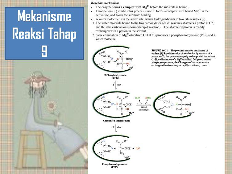 Mekanisme Reaksi Tahap 9