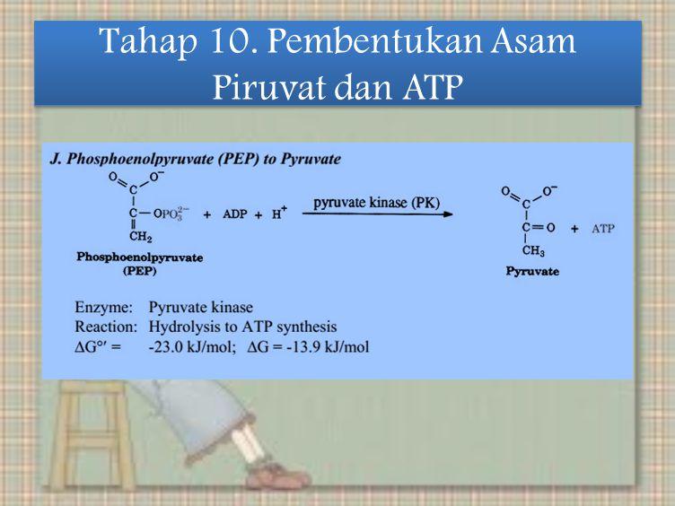 Tahap 10. Pembentukan Asam Piruvat dan ATP