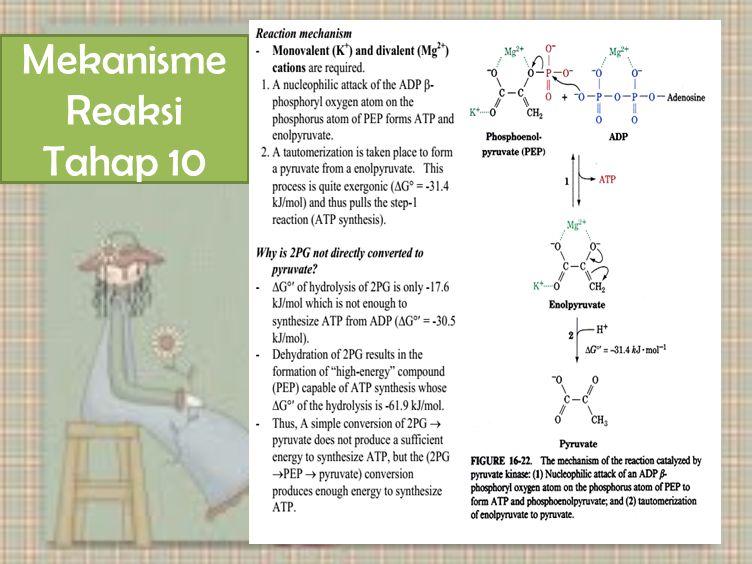 Mekanisme Reaksi Tahap 10