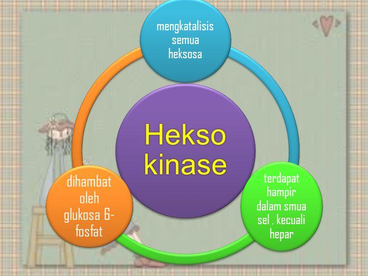 Hekso kinase mengkatalisis semua heksosa terdapat hampir dalam smua sel, kecuali hepar dihambat oleh glukosa 6- fosfat