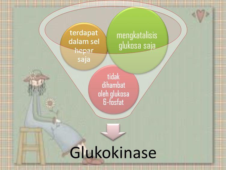 Glukokinase tidak dihambat oleh glukosa 6-fosfat terdapat dalam sel hepar saja mengkatalisis glukosa saja