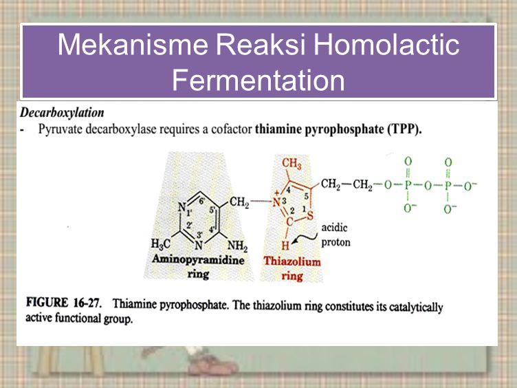 Mekanisme Reaksi Homolactic Fermentation