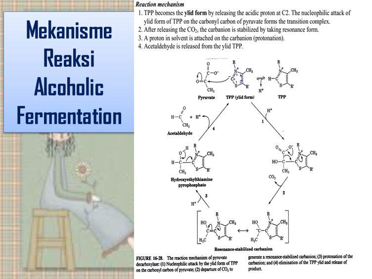 Mekanisme Reaksi Alcoholic Fermentation