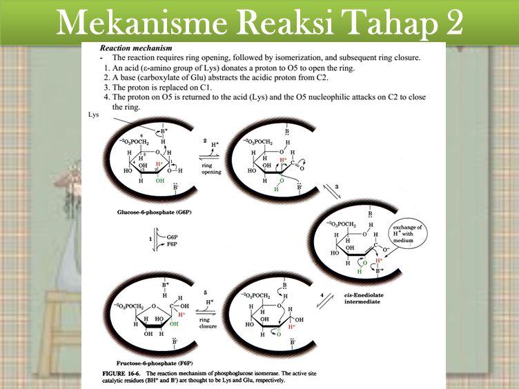 Mekanisme Reaksi Tahap 2