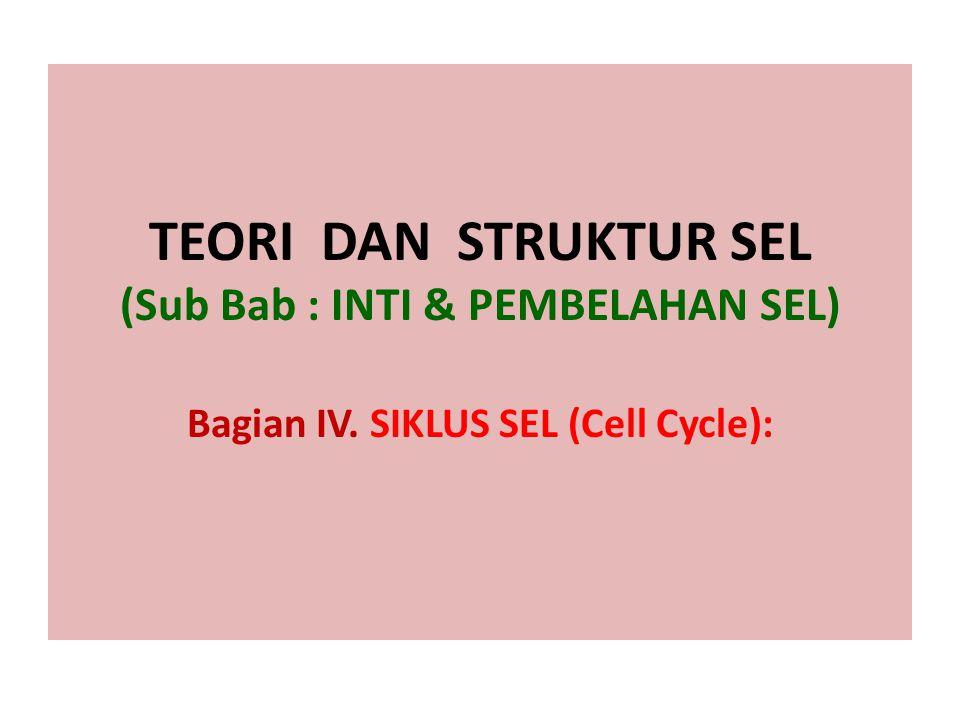 TEORI DAN STRUKTUR SEL (Sub Bab : INTI & PEMBELAHAN SEL) Bagian IV. SIKLUS SEL (Cell Cycle):
