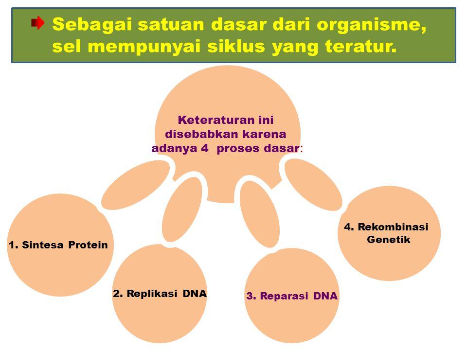 Keteraturan ini disebabkan karena adanya 4 proses dasar : 2. Replikasi DNA 3. Reparasi DNA 4. Rekombinasi Genetik 1. Sintesa Protein Sebagai satuan da