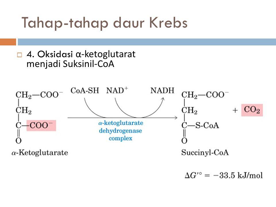 Tahap-tahap daur Krebs  4. Oksidasi α-ketoglutarat menjadi Suksinil-CoA