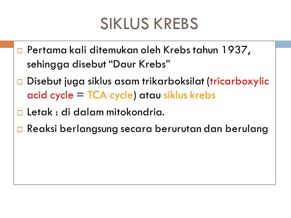 """SIKLUS KREBS  Pertama kali ditemukan oleh Krebs tahun 1937, sehingga disebut """"Daur Krebs""""  Disebut juga siklus asam trikarboksilat (tricarboxylic ac"""