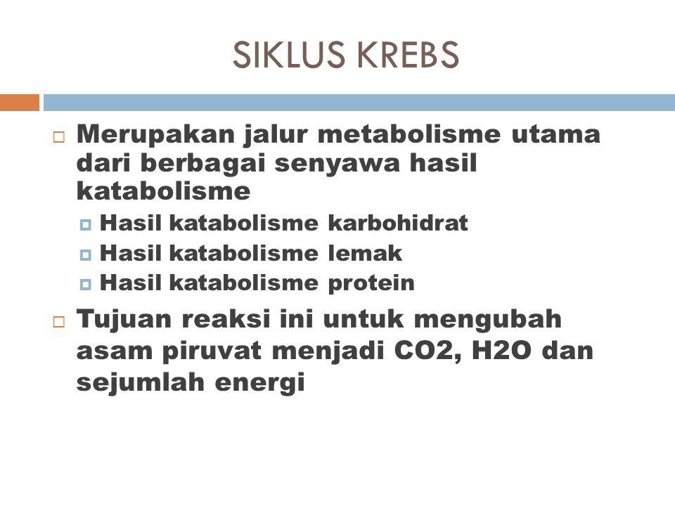 SIKLUS KREBS  Merupakan jalur metabolisme utama dari berbagai senyawa hasil katabolisme  Hasil katabolisme karbohidrat  Hasil katabolisme lemak  H