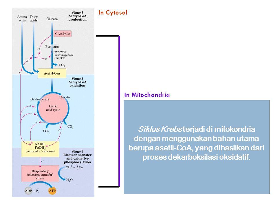 In Mitochondria In Cytosol Siklus Krebs terjadi di mitokondria dengan menggunakan bahan utama berupa asetil-CoA, yang dihasilkan dari proses dekarboks