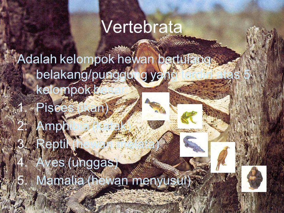 Vertebrata Adalah kelompok hewan bertulang belakang/punggung yang terdiri atas 5 kelompok besar: 1.Pisces (ikan) 2.Amphibia (katak) 3.Reptil (hewan melata) 4.Aves (unggas) 5.Mamalia (hewan menyusui)