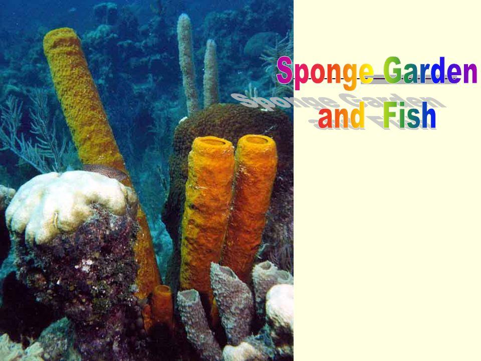 Molusca Ciri-Ciri: 1.Bertubuh lunak, berlendir 2.Tubuh hanya terdiri dari kepala dan perut 3.Beberapa kelompok bercangkang dari zat kapur 4.Hidup di air laut, air tawar dan darat Terbagi menjadi: 1.Kerang (lamellibranchiata) 2.Cumi-cumi (Cephalopoda) 3.Siput (gastropoda)