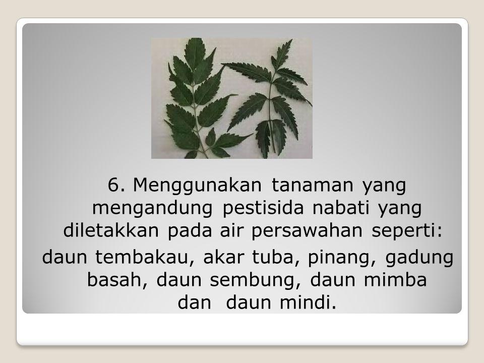 6. Menggunakan tanaman yang mengandung pestisida nabati yang diletakkan pada air persawahan seperti: daun tembakau, akar tuba, pinang, gadung basah, d